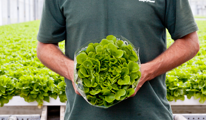 How different growing environments can influence nitrate levels in leafy greens